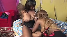 Horny black bitches with lotsa curves make each other moan loud